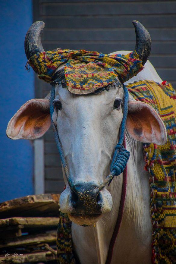 A bull in flower market